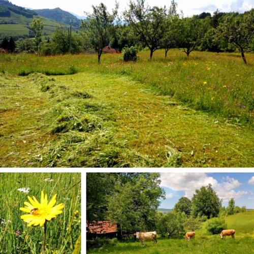 Peisaj Natura Visag, jud Cluj